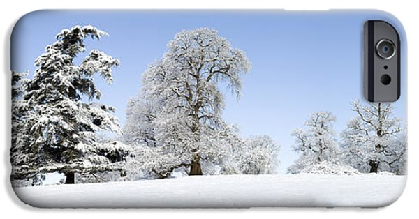Winter Scene iPhone Cases - Winter Tree Line iPhone Case by Tim Gainey