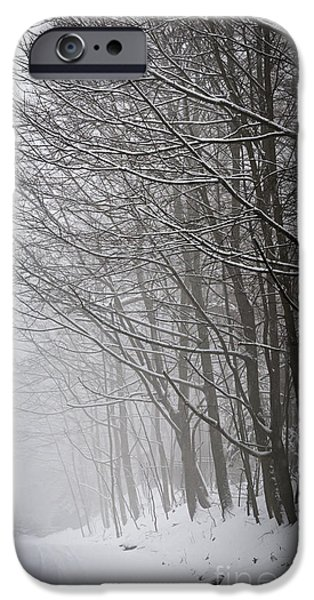 Condition iPhone Cases - Winter trees along snowy road iPhone Case by Elena Elisseeva