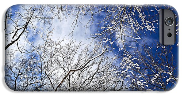 Cold Weather iPhone Cases - Winter trees and blue sky iPhone Case by Elena Elisseeva