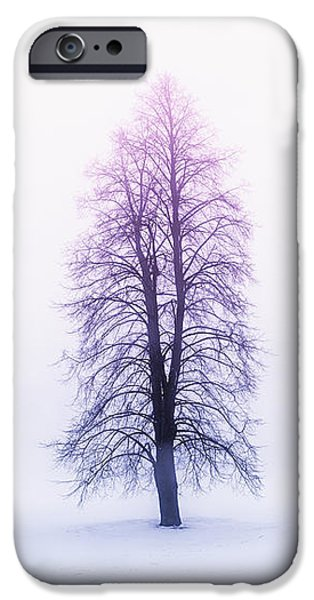 Winter trees in fog at sunrise iPhone Case by Elena Elisseeva