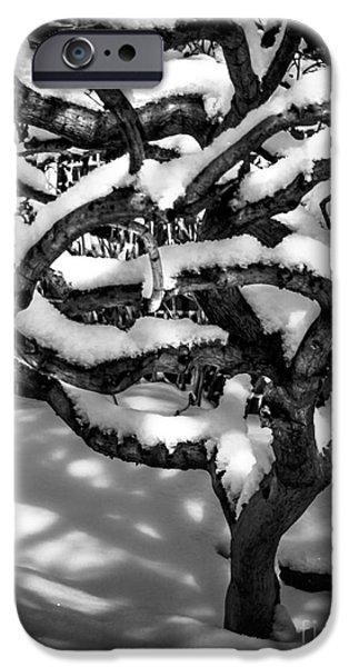 Asymmetrical iPhone Cases - Winter Treescape iPhone Case by James Aiken