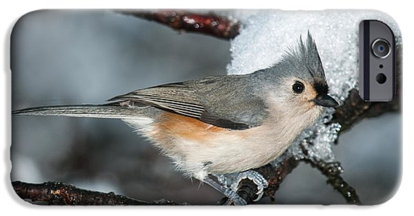 Tufted Titmouse iPhone Cases - Winter  Tufted Titmouse iPhone Case by Lara Ellis