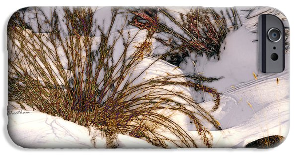 Wintertime iPhone Cases - Winter Weeds iPhone Case by Kae Cheatham