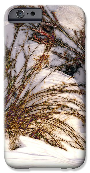 Winter Weeds iPhone Case by Kae Cheatham