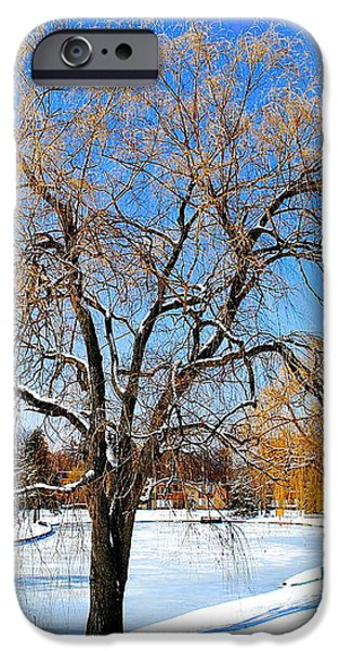 Winter Willow iPhone Case by Frozen in Time Fine Art Photography