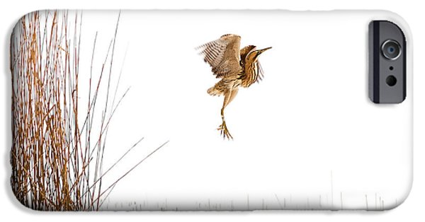Bird In Flight iPhone Cases - Winter Wonder Dance - Eursian Bittern in the snow iPhone Case by Roeselien Raimond