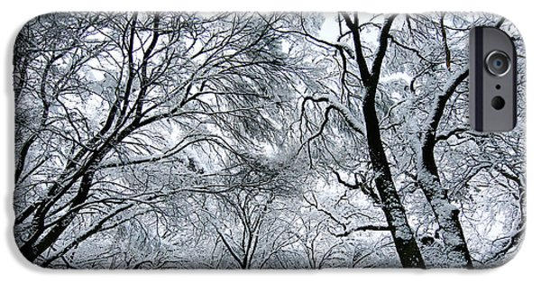 Winter Trees Photographs iPhone Cases - Winter Wonder iPhone Case by Jeff Klingler