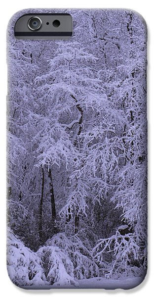 Snow Scene iPhone Cases - Winter Wonderland 1 iPhone Case by Mike McGlothlen