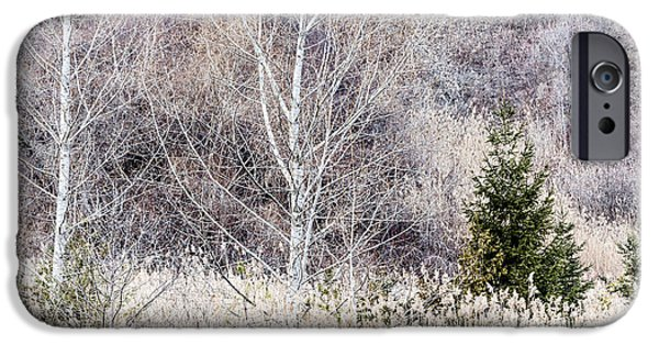 Dried iPhone Cases - Winter woodland with subdued colors iPhone Case by Elena Elisseeva