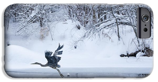 Canandaigua Lake iPhone Cases - Wintering Heron In Flight iPhone Case by Roger Bailey