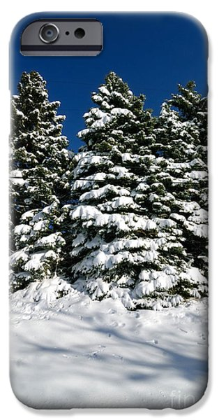Winter Storm iPhone Cases - Wintery Pines iPhone Case by Amy Cicconi