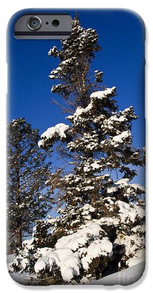 Snowy Scene iPhone Cases - Wintery Scene iPhone Case by Terry Elniski