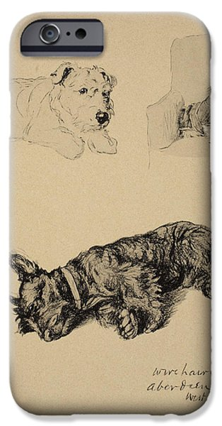 Black Dog iPhone Cases - Wire-haired Terrier, Aberdeen And West iPhone Case by Cecil Charles Windsor Aldin