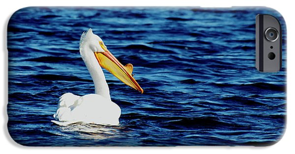 Matting Photographs iPhone Cases - Wisconsin Pelican iPhone Case by Thomas Young