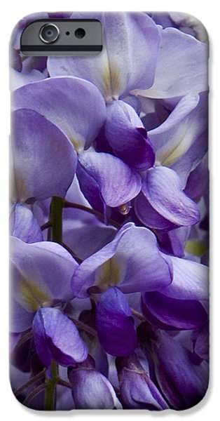 Wisteria iPhone Case by Michael Friedman