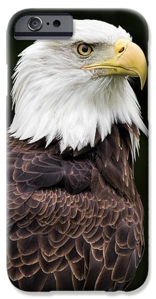 Wild Animals iPhone Cases - With Dignity iPhone Case by Dale Kincaid