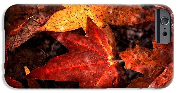 Warner Park iPhone Cases - With Love - Autumn Pond iPhone Case by Theresa  Asher