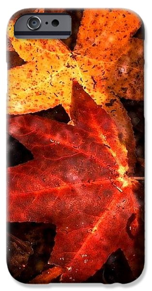 With Love - Autumn Pond iPhone Case by Theresa  Asher