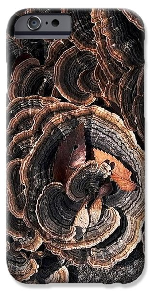 With Love - Grounded iPhone Case by Theresa  Asher