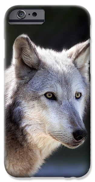 Wolf Image iPhone Cases - Wolf iPhone Case by Brandon Alms