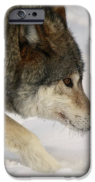 Wolf Dreams iPhone Case by Inspired Nature Photography By Shelley Myke