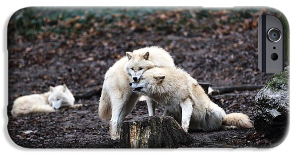 Wolf Image iPhone Cases - Wolf Kiss iPhone Case by John Rizzuto