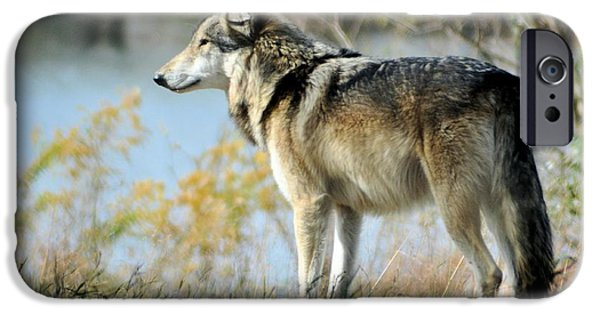 Puppies iPhone Cases - Wolf iPhone Case by Michelle McPhillips