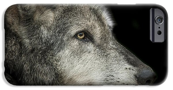 Grey Photographs iPhone Cases - Wolf iPhone Case by Paul Neville