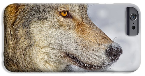 Canine Greeting Cards Digital Art iPhone Cases - Wolf Profile iPhone Case by Jerry Fornarotto