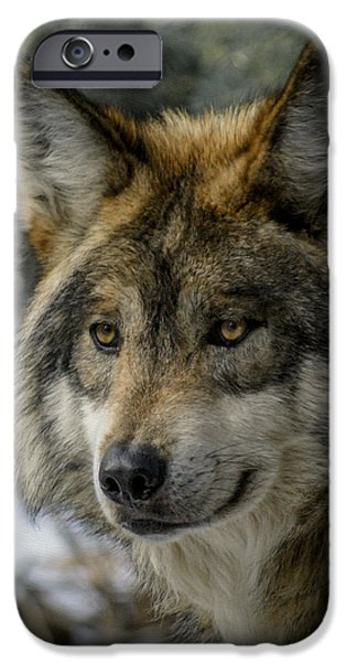 Wolf Digital Art iPhone Cases - Wolf upclose 2 iPhone Case by Ernie Echols