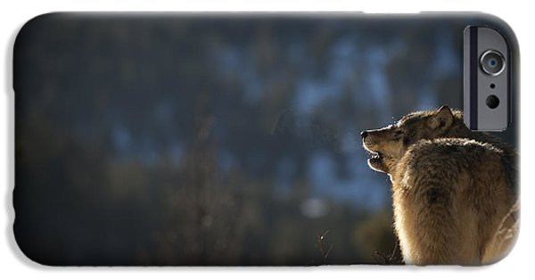 Animals iPhone Cases - Wolves-animals-image 9 iPhone Case by Wildlife Fine Art