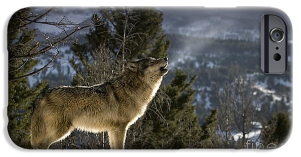 One iPhone Cases - Wolves Nature Song iPhone Case by Wildlife Fine Art