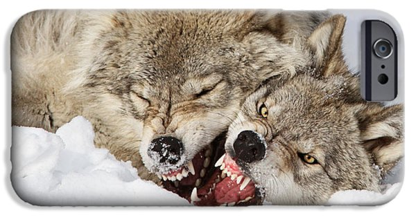 Crocks iPhone Cases - Wolves Rules iPhone Case by Mircea Costina Photography