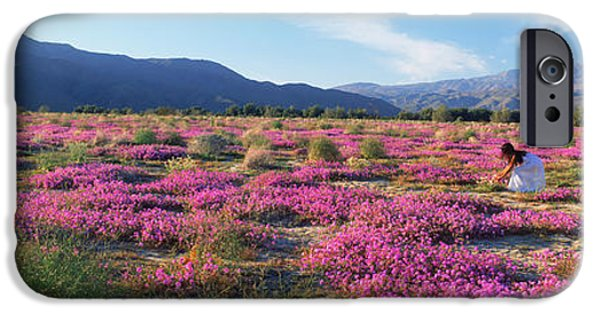 Park Scene iPhone Cases - Woman In A Desert Sand Verbena Field iPhone Case by Panoramic Images