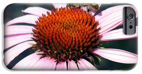 Echinacea iPhone Cases - WONDER of POLLEN iPhone Case by Karen Wiles