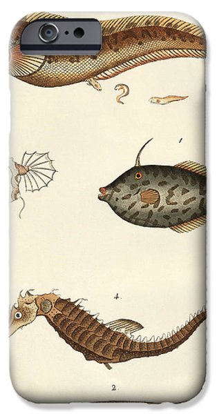 Fish Drawings iPhone Cases - Wonderful fish iPhone Case by German School