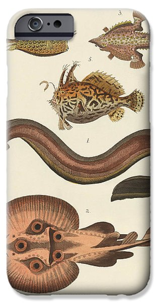 Electric Drawings iPhone Cases - Wonderful fish iPhone Case by Splendid Art Prints
