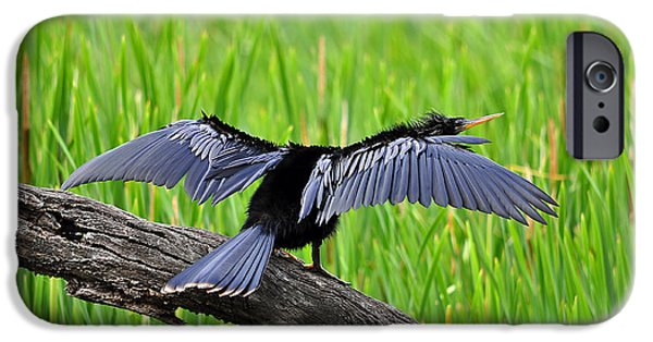 Anhinga iPhone Cases - Wonderful Wings iPhone Case by Al Powell Photography USA