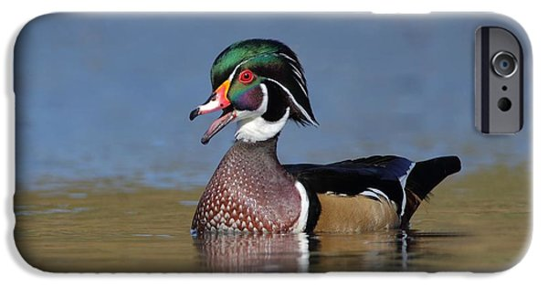 Water Colors Pyrography iPhone Cases - Woo Duck Calling iPhone Case by Daniel Behm