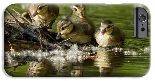 Baby Bird iPhone Cases - Wood Duck Babies iPhone Case by Mircea Costina Photography