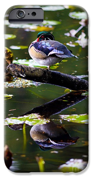 Beaver Lake iPhone Cases - Wood Duck Balancing Act 2 iPhone Case by Terry Elniski