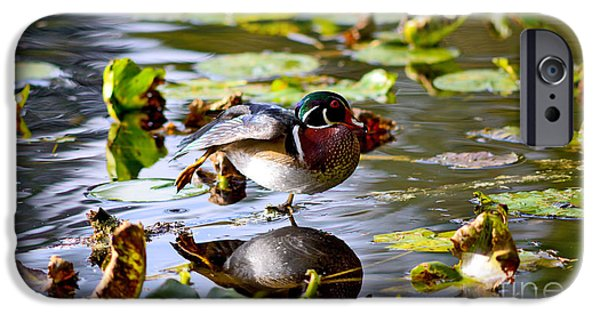 Beaver Lake iPhone Cases - Wood Duck Stretching On One Leg iPhone Case by Terry Elniski
