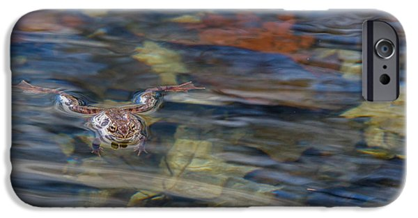 Frogs Photographs iPhone Cases - Wood Frog Square iPhone Case by Bill  Wakeley