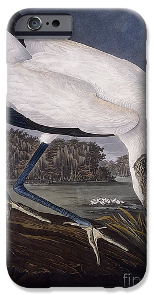 Feather Drawings iPhone Cases - Wood Ibis iPhone Case by John James Audubon
