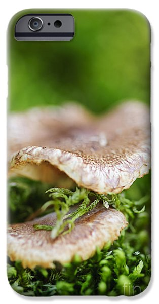 Mushrooms iPhone Cases - Wood mushrooms iPhone Case by Elena Elisseeva