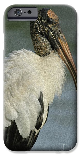 Stork iPhone Cases - Wood Stork in Oil iPhone Case by Deborah Benoit