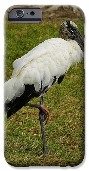 Fed iPhone Cases - Wood Stork iPhone Case by Laurie Perry