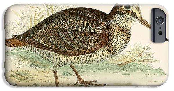 Hunting Bird iPhone Cases - Woodcock iPhone Case by Beverley R. Morris