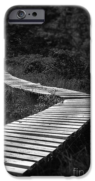Mangrove Forest iPhone Cases - Wooden bridge iPhone Case by Kenneth Moelgaard