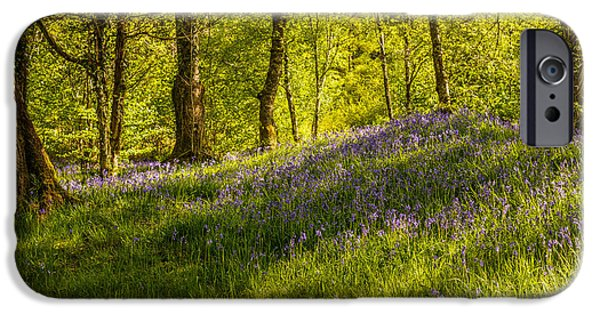 Dappled Light Photographs iPhone Cases - Woodland Of Bluebells iPhone Case by Amanda And Christopher Elwell